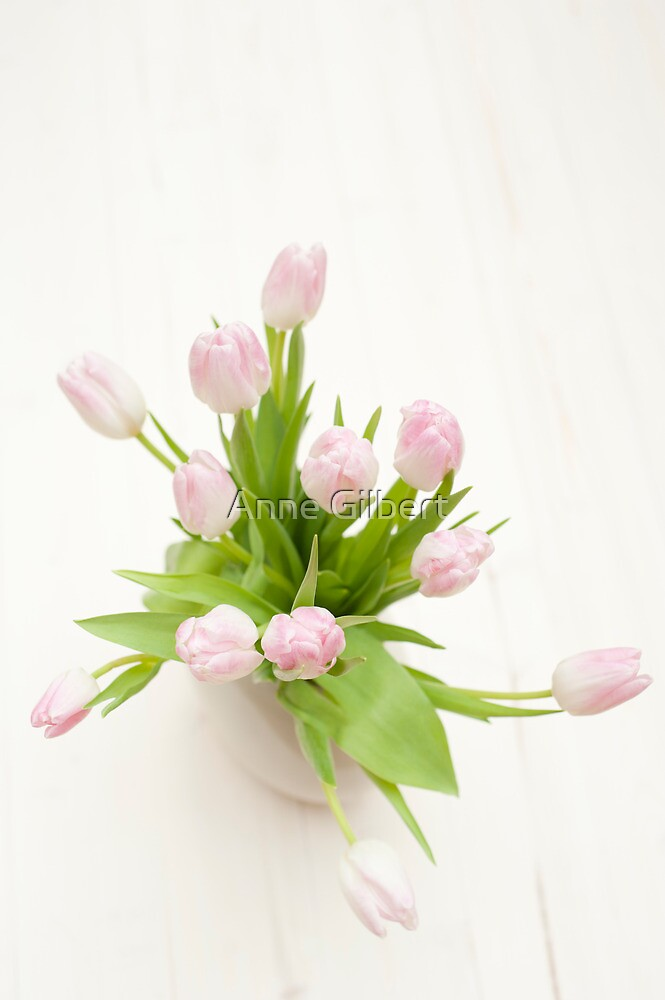 Pastel Pink Tulips by Anne Gilbert