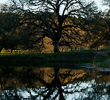 Oaken Reflection by RFA-Photography