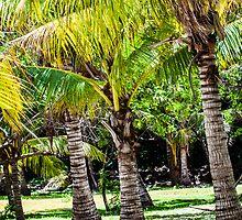 Coconut tree by Mariusz Prusaczyk