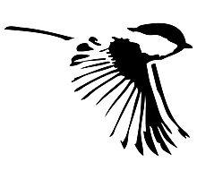 Small Bird in Flight Photographic Print