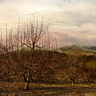 The Winter Apple Orchard Series  by JKKimball