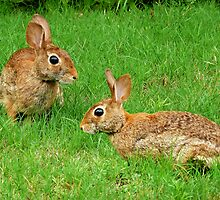 Bunnies by Evelyn Laeschke
