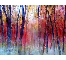 Il bosco dei sussurri Photographic Print
