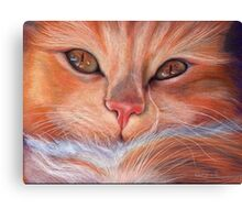 Soft Kitty, Warm Kitty... Canvas Print