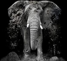 The Disappearance of the Elephant by Erik Brede