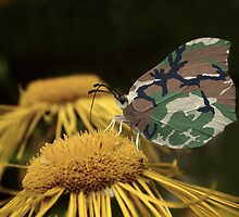 Funny Camouflaged Butterfly by Kitty Bitty