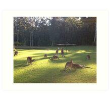 Iconic Kangaroo under Hills Hoyst !!! Art Print