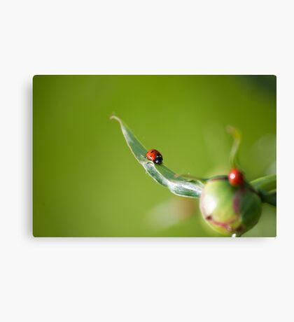 Ladybug on Flower Canvas Print