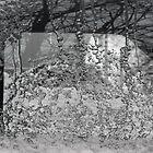Frozen Window by tonipix