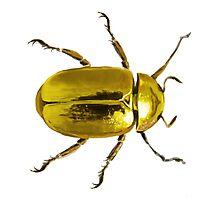 Gold Beetle Photographic Print
