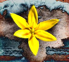 Sonic Bloom no.165 by dekdav