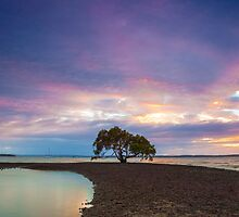 Victoria Point Solo Tree by McguiganVisuals