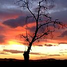 The Sunset Tree by George Petrovsky