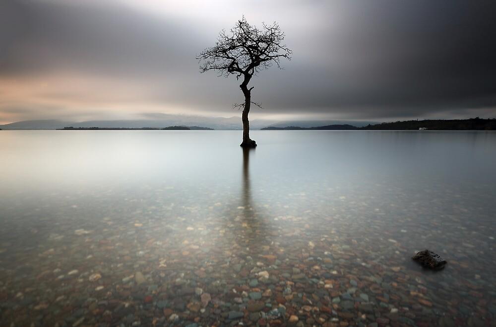 Loch Lomond Tree by Grant Glendinning