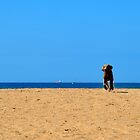 Weimaraner on the beach by TheMadame