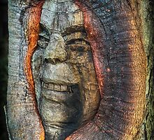 Old Man Tree by Paul Barralet