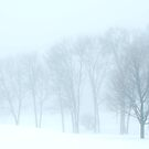 Soft Winter by Mary Ann Reilly