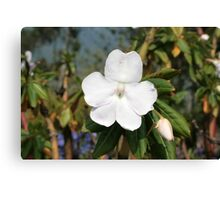 White Flower Blooming Canvas Print
