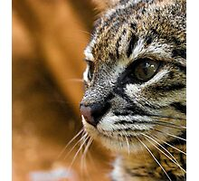 Cats Eyes Photographic Print