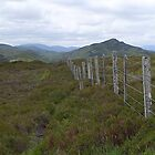Highland Fence by triciamary