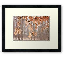 Combo of Seasons Framed Print