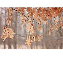 Combo of Seasons Photographic Print
