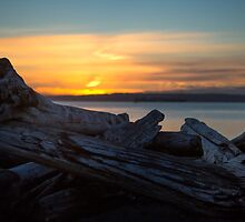 Driftwood Sunset by Arclightstudios