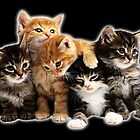 Kittens by augustinet