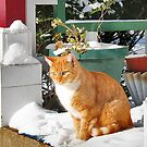 Cat Contemplating Snow by Nadya Johnson