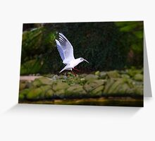 Victory! Seagull with prey Greeting Card