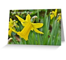 Daffodils - Birthday Card from Wales Greeting Card