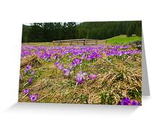 Crocus Field and Pen Greeting Card