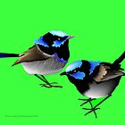 Blue Wrens by rodesigns