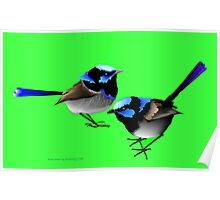 Blue Wrens Poster