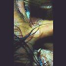 Daryl Eyes by Tracey Gurney