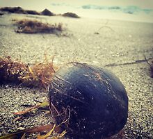 Coconut on the beach by schlykie19