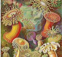 Earnest haeckel art by Boogiemonst