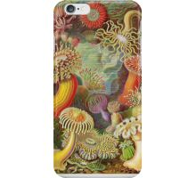Earnest haeckel art iPhone Case/Skin