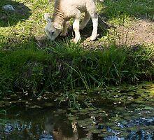 Cute Little Lamb, Reflected by Georgia Mizuleva