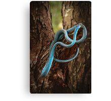 Tree Snake Canvas Print