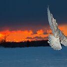 Back light by jamesmcdonald