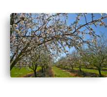 Almond Plantation Canvas Print