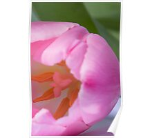TULIP ABSTRACT Poster