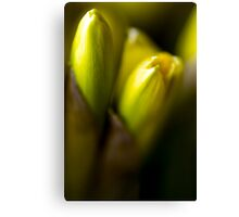 ABSTRACT OF DAFFODILS IN BUD Canvas Print