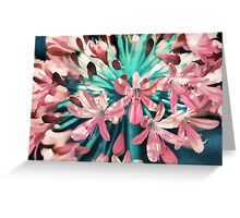 Sunny Agapanthus Flower in Pink & Teal Greeting Card
