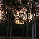 Sunset from the back verandah by Mark Batten-O'Donohoe