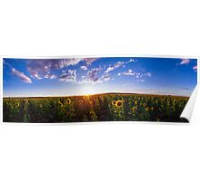 Sunshine and Sunflowers Poster