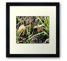 Ladybug Climbing a Piece of Grass Framed Print