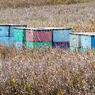 Bee Hives by Mary Carol Story