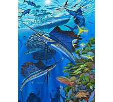 Sailfish Reef Photographic Print